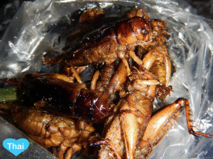 Things to do in Bangkok Insect Eating Love Thai Maak Ging Leed or Cricket