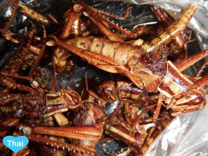 Things to do in Bangkok Insect Eating Love Thai Maak Tak Ga Taen or Glasshopper