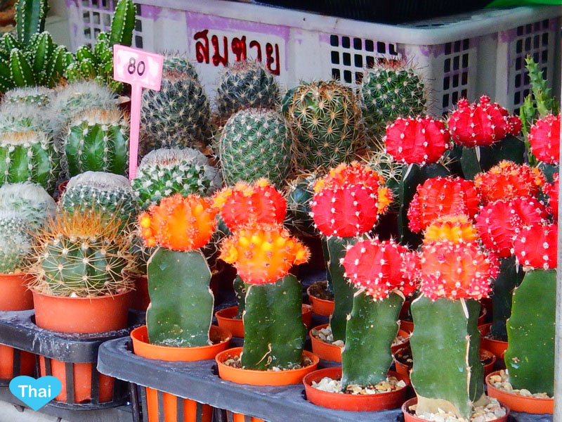things to do in Bangkok : Chatuchak market plants and trees by Love Thai Maak