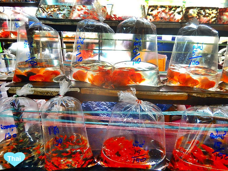 things to do in Bangkok : Chatuchak market Pets and Fishes by Love Thai Maak