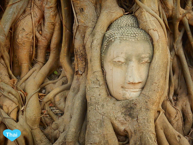 Travel to Ayutthaya from Bangkok | Love Thai Maak The Iconic Buddha Tree At Wat Mahathat